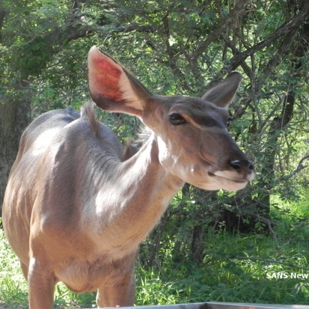 Marloth Park self catering accommodation