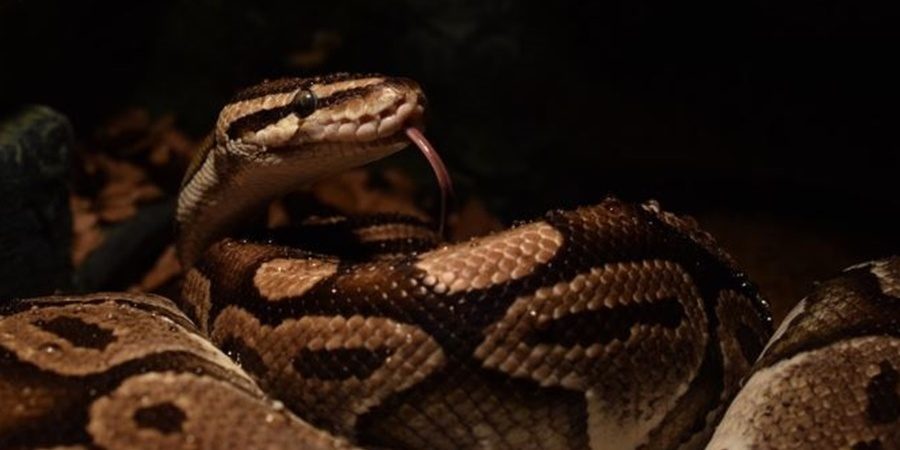 South Africa's Reptiles