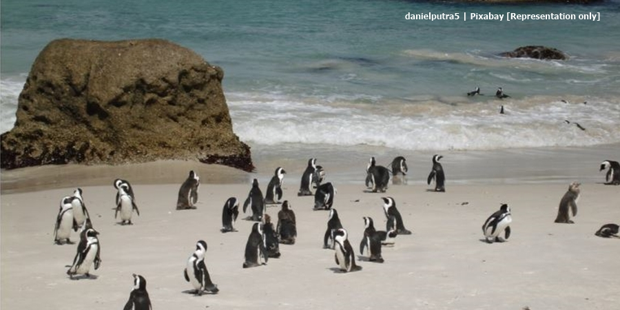 South Africa Travel site shares photo of Boulders Penguin Colony